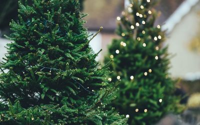 Pre-order your Christmas tree before December for FREE delivery!