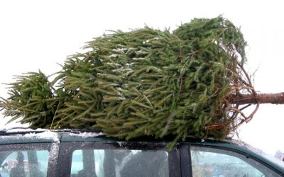 Pre-order you Christmas tree now.