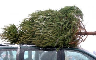 Sam's Top Tips for choosing the perfect Christmas tree and caring for it