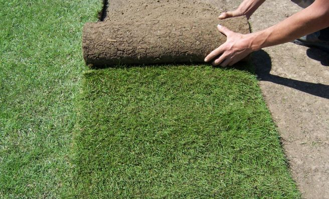new turf grass per roll