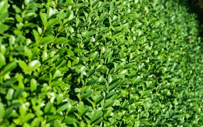 Hedging and Screening