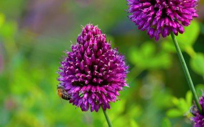 Bees, Butterflies, Birds and Bulbs! September 2021